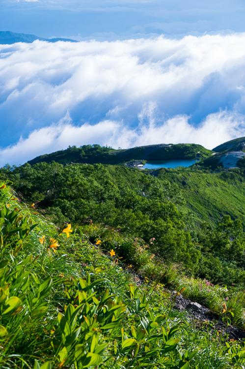 唐松岳 登山 トレッキング 下の樺 八方池 ニッコウキスゲ