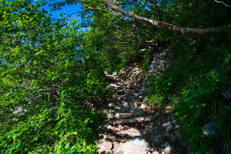 唐松岳 登山 トレッキング 上の樺