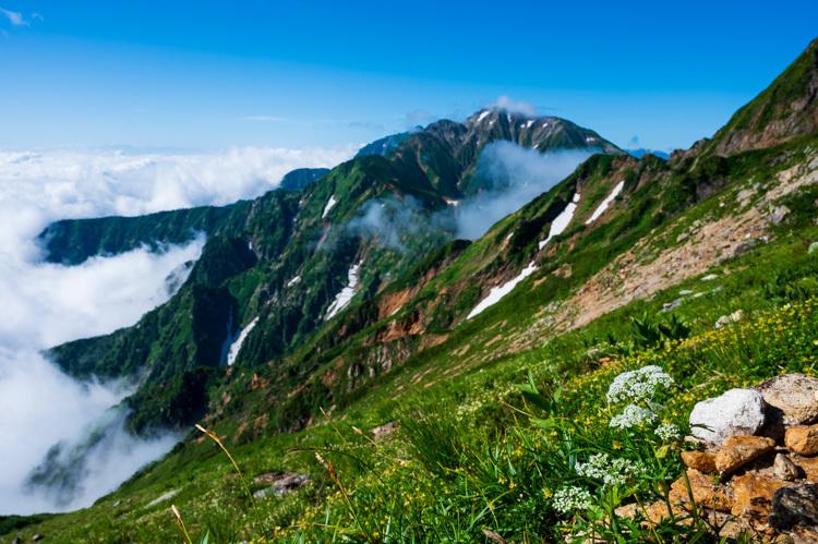 唐松岳 トレッキング 五竜岳 チングルマ 花