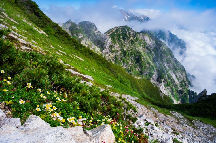 唐松岳 トレッキング 山頂 チングルマ 不帰の険
