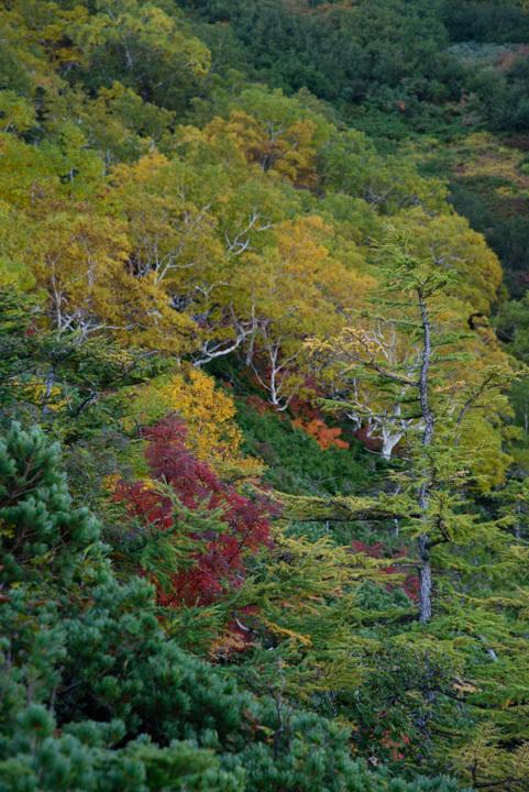 蓮華温泉 白馬大池 紅葉 黄葉 天狗の庭