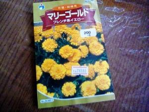 マリーゴールド、花の種