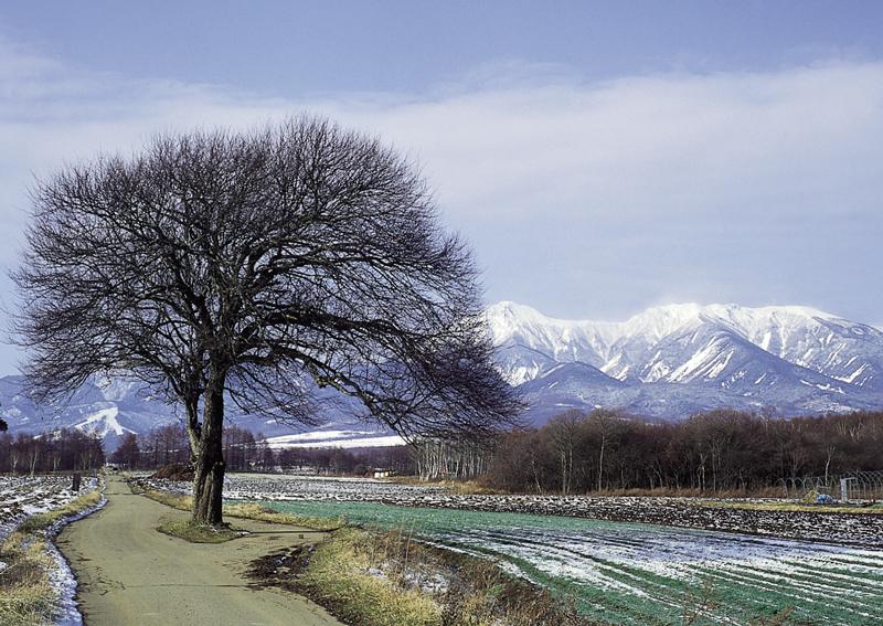 1993野辺山800
