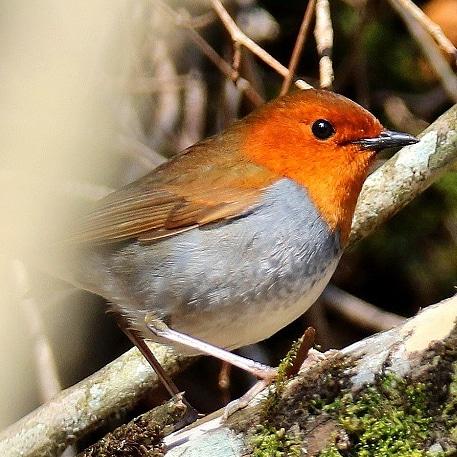 とりっちの野鳥フォト2