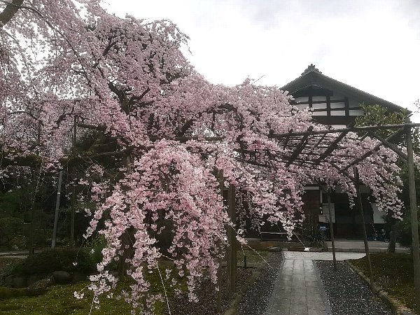 daihohji-takefu-007.jpg