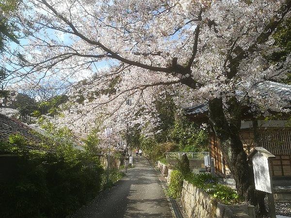 kanakasakigu4-tsuruga-003.jpg