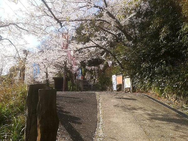 kanakasakigu4-tsuruga-007.jpg