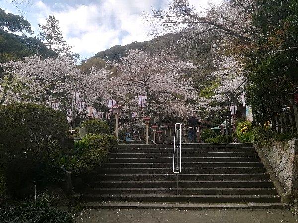 kanakasakigu4-tsuruga-014.jpg