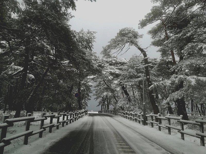 matsubara2-tsuruga-004.jpg