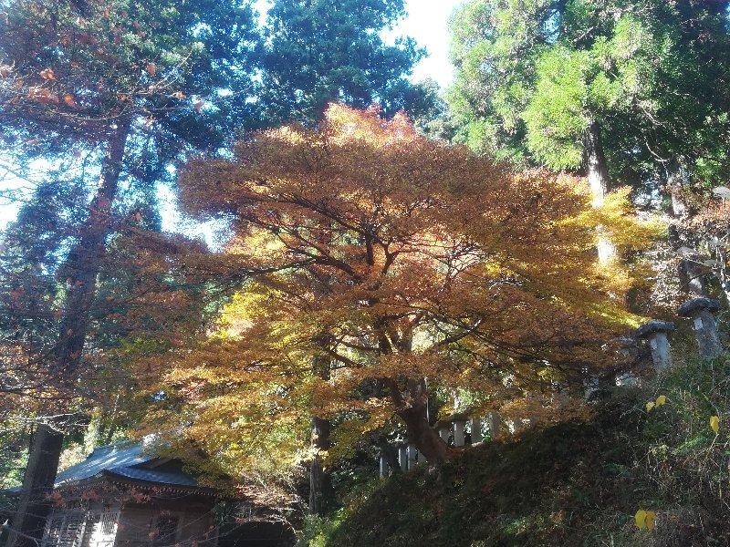okafuto2-awatabe-028.jpg