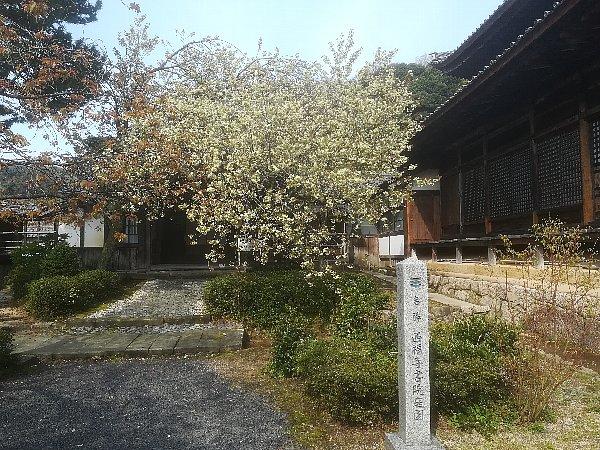 saifukugi5-tsuruga-001.jpg