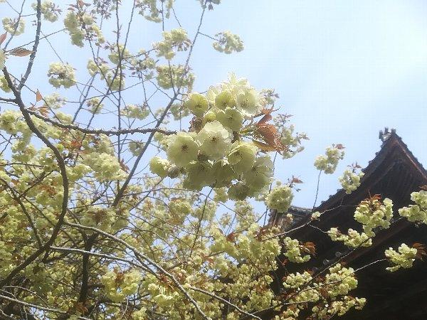 saifukugi5-tsuruga-008.jpg
