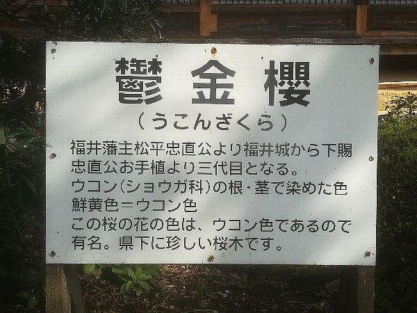 saifukugi5-tsuruga-011.jpg
