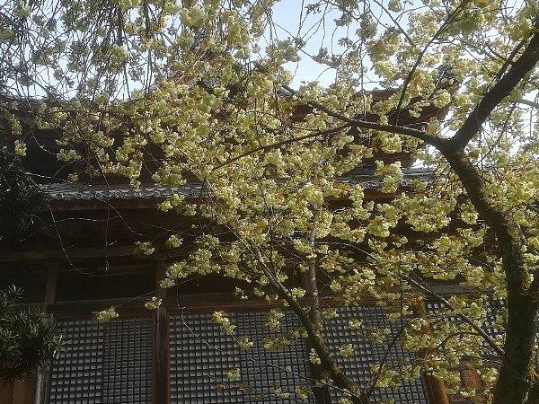 saifukugi5-tsuruga-012.jpg