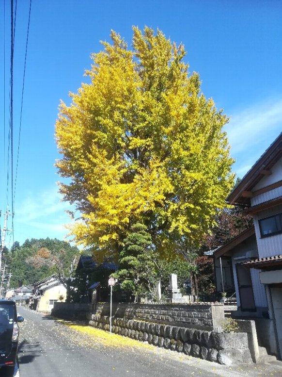 saikouji-sabae-003.jpg