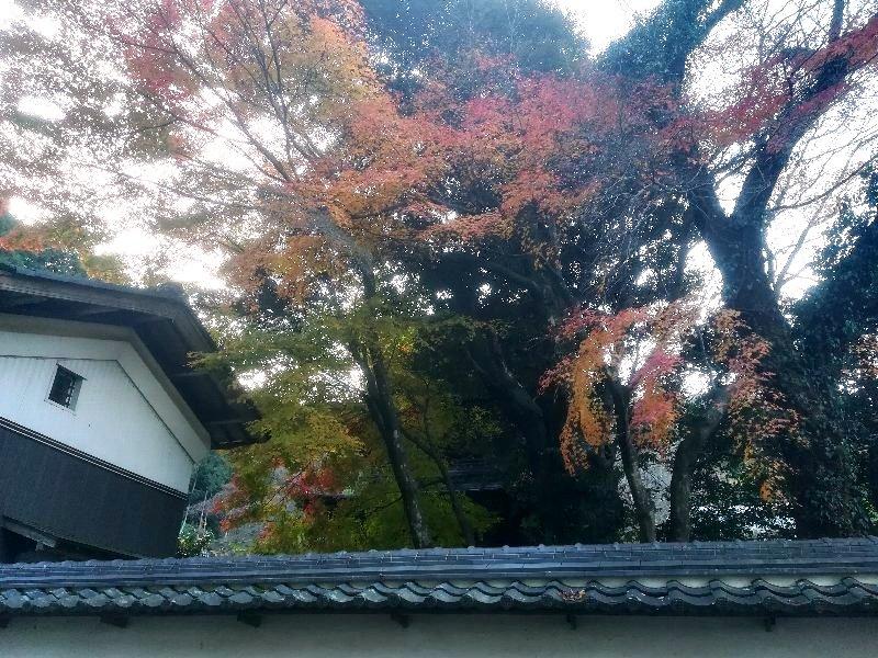 tokugenin-maibara-008.jpg
