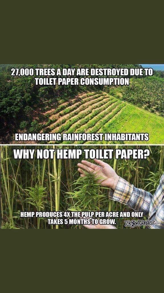 大麻 植林
