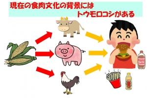 トウモロコシ食文化