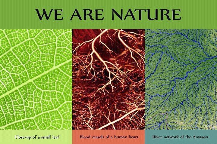 自然 大地