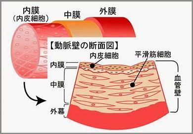 ケイ素 内皮細胞