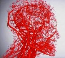 毛細血管 頭