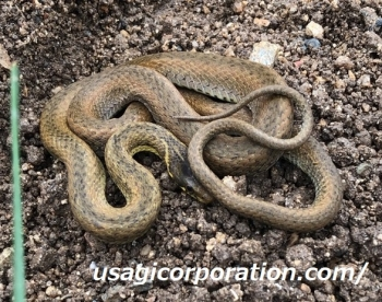 2020 1008 蛇2