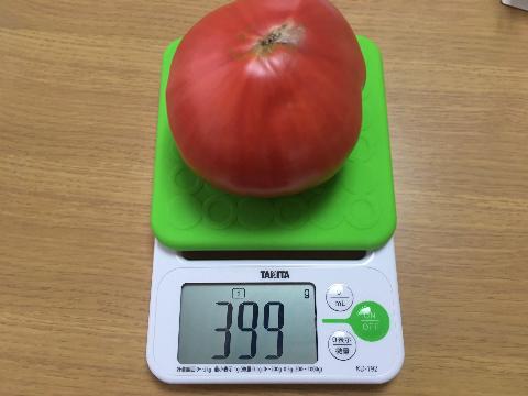 20200612 大玉トマト⑤