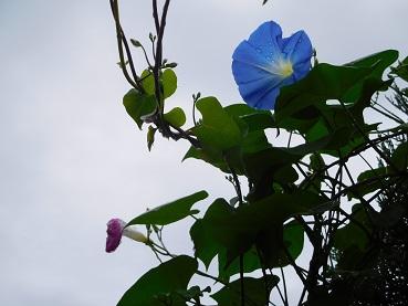 bluu4.jpg