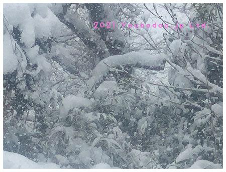 雪 遊歩道